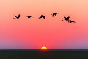 Gratitude - Celebrating nature, family, God