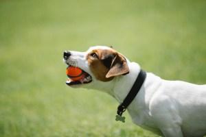 My dog - My best friend