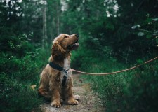 Dog's Life – What Your Dog's Trying To Tell You | Bookosmia