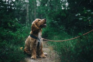 Dog's Life - What your dog's trying to tell you