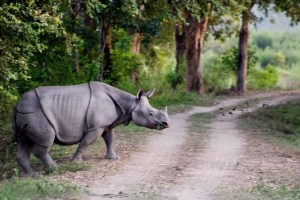 World Rhino Day - Meeting a rhino in Singapore Zoo