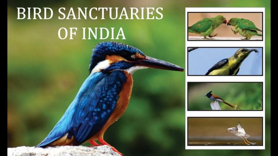 Bird Sanctuaries in India Notes 2021