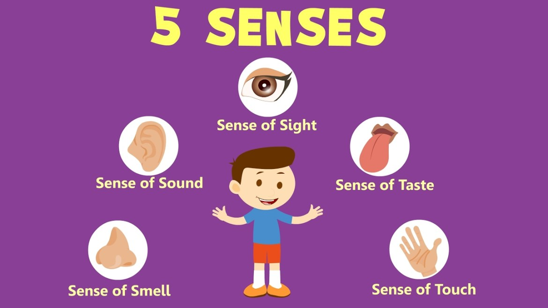 5 senses key