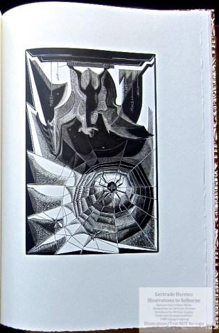 Gertrude Hermes 'Gregynog' Selborne, Gwasg Gregynog, Sample Illustration #5