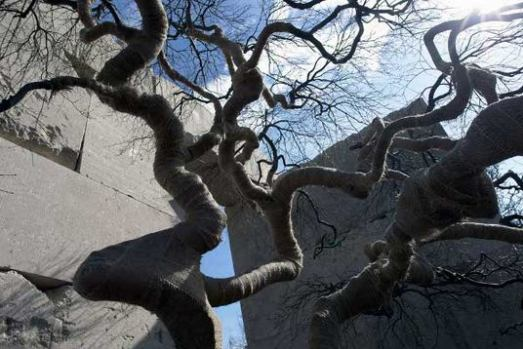 Tree Museum Switzerland