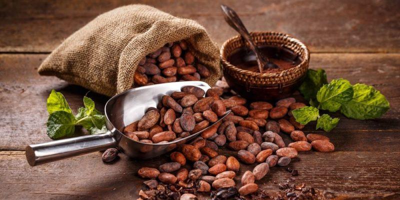 cacao mexicano en semilla