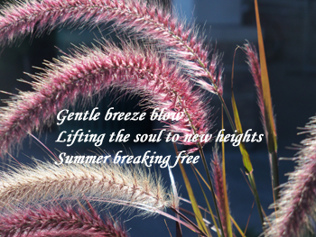 gentle-breeze-haiku