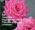 sad-cinquain-poem