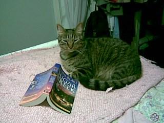 Author Manda Collins' cat Tiny.