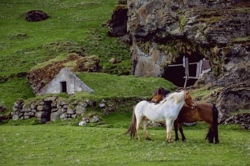 horses-945388_1920