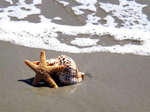 starfish-536677_1920