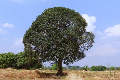 Niranjana Hariharanandanan