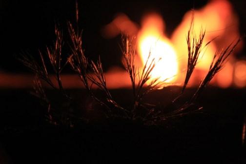 fire-971949_1920