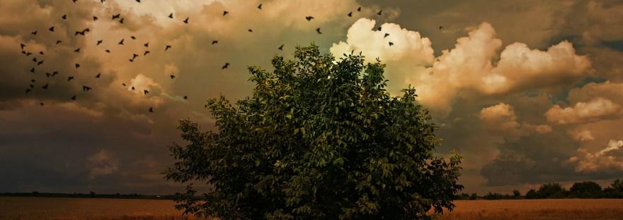 Great Plains Birds by Larkin Powell