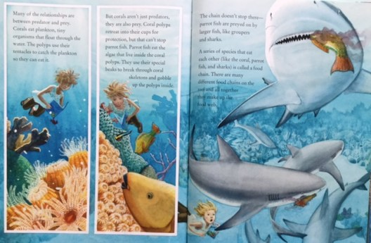 coral reefs food chain