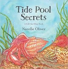 tide pool secrets cover