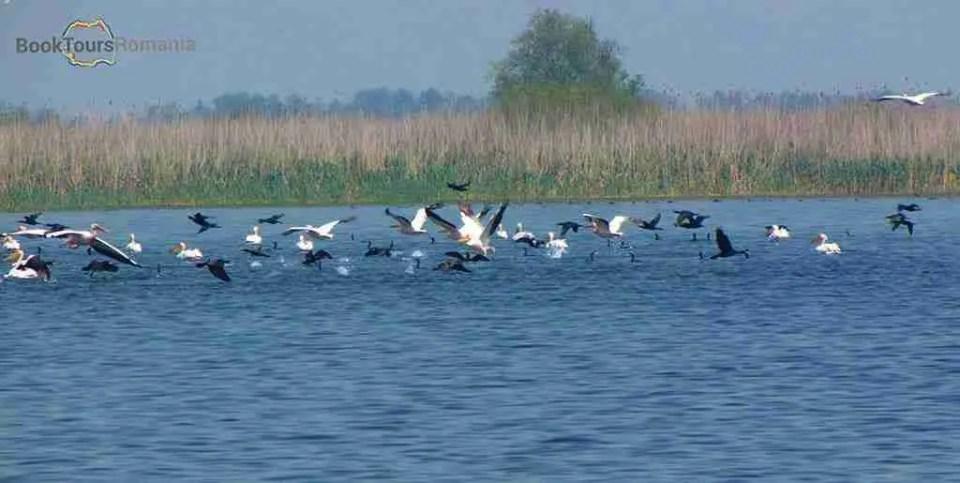 Danube delta bird watching