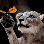 Download lecture Note On Animal Diversity