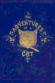 The Adventures of a Cat And a Fine Cat too! Pdf