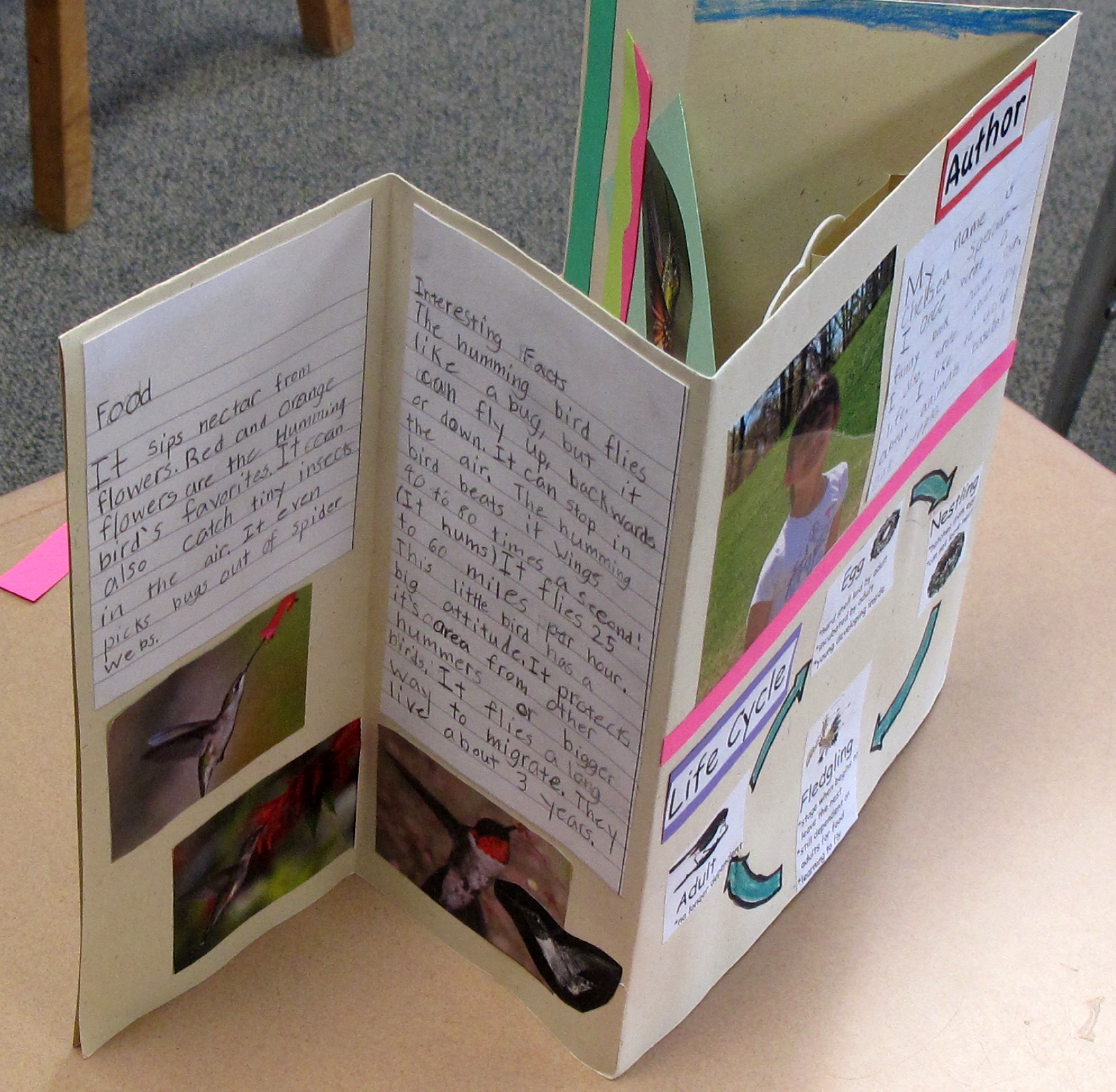 Adirondack Birds Books By Second Graders Playful