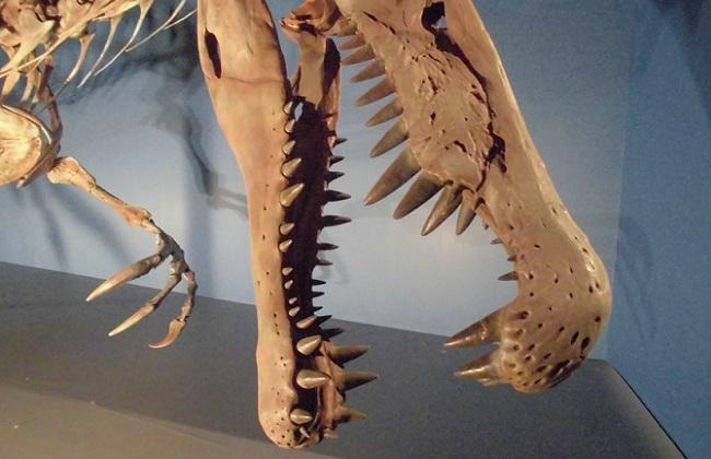 恐竜博2016の様子(スピノサウルス)
