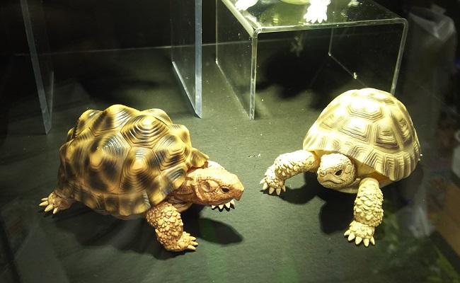 BANDAI(バンダイ)ブースの様子 …「東京おもちゃショー2019」より