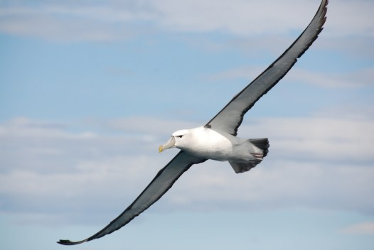 10-poems-read-before-you-leave-school-albatross