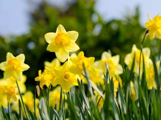 10-poems-read-before-you-leave-school-daffodils