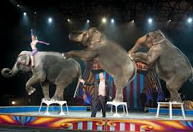 Wild animals performing undignified circus acts has always made me feel sick to my stomach.