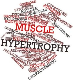 16774208 - abstract word cloud for muscle hypertrophy with related tags and terms