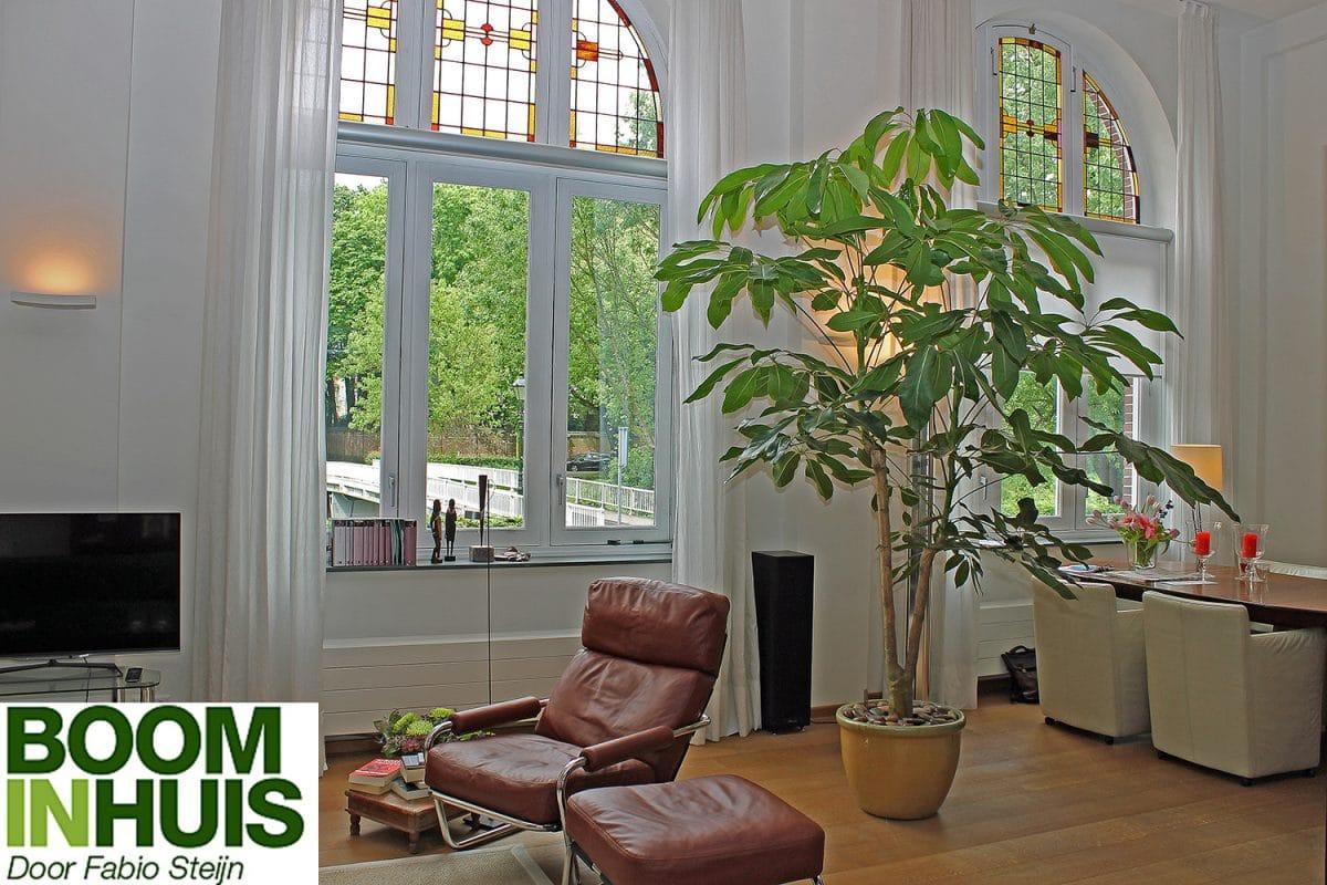 Portfolio  Bomen Plantenbakken  kamerplanten online kopen