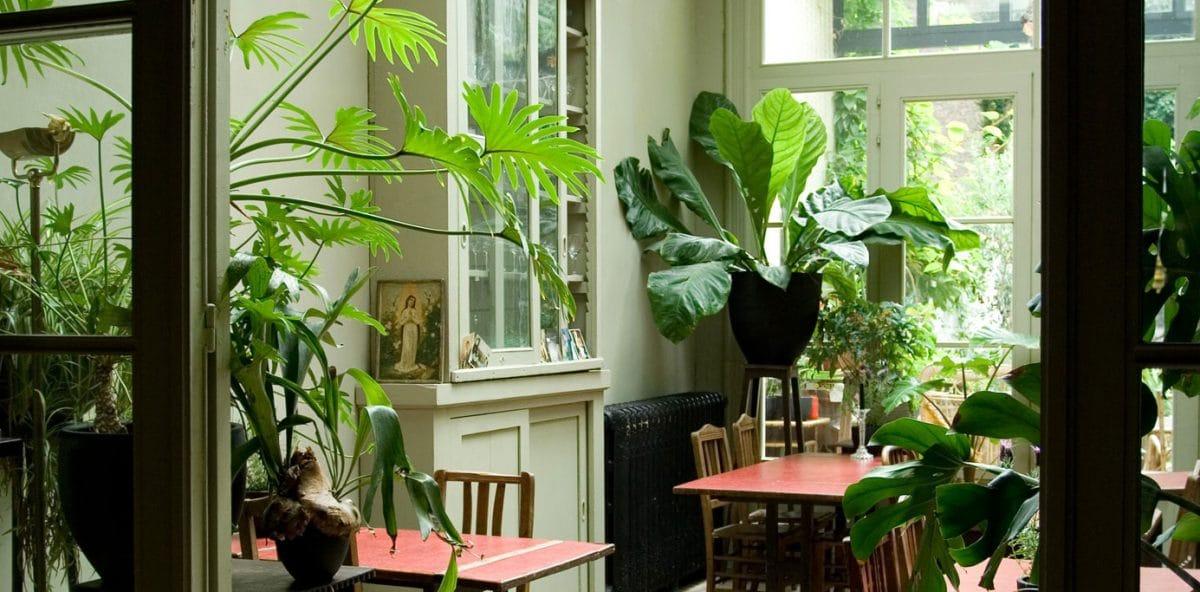 Boom in Huis  Grote planten bomen en plantenbakken kopen