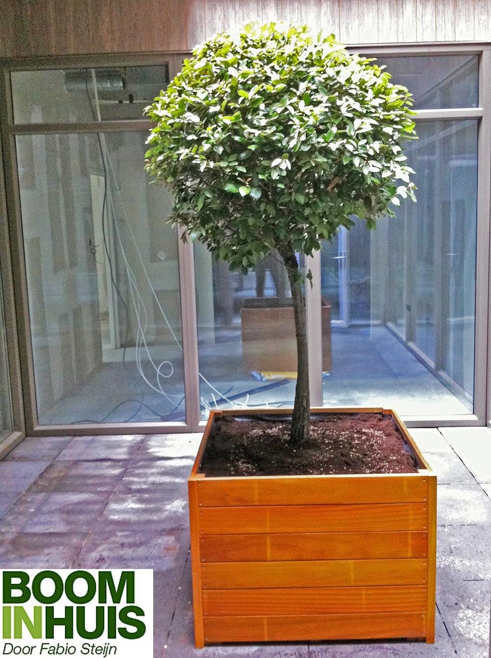 Portfolio  Grote plantenbakken Bomen kopen kamerplanten