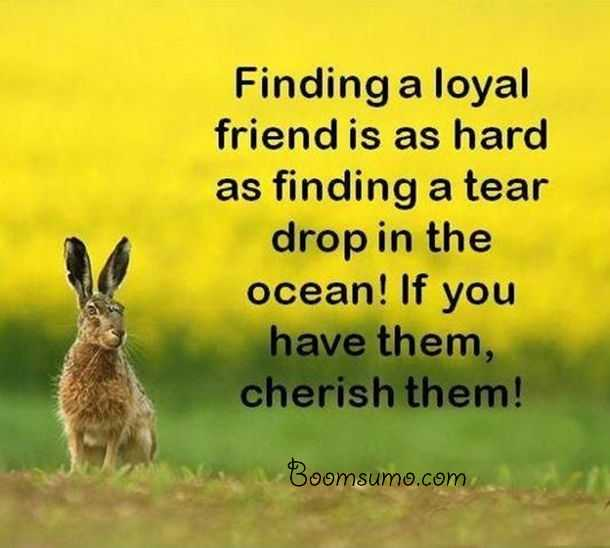 Friendship Sayings And Friendship Quotes Finding A Loyal Friend