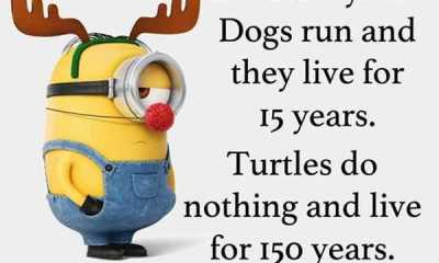 Cool Funny Quotes Live 150 years funny phrases funny sayings about life