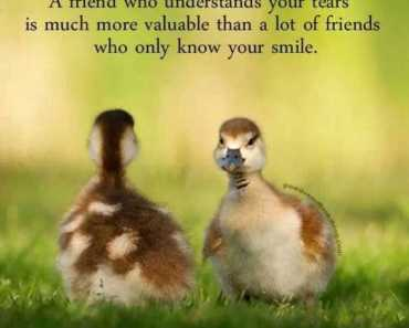 Best Friendship Quotes A friend Who Understand Your Tears Quotes About Best Friend