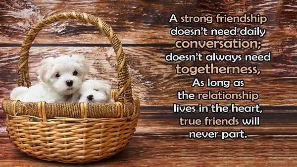 Best Friendship Quotes: If You Are True Friends Never Daily, Talk It