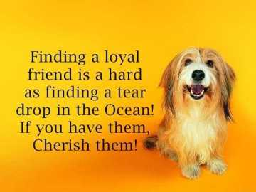 Best Friendship Quotes and Friendship Sayings Finding a loyal friend, keep it