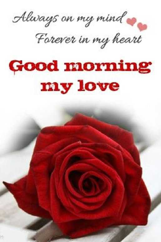 Good Morning My Love Full Hd Image Wallpaper Images