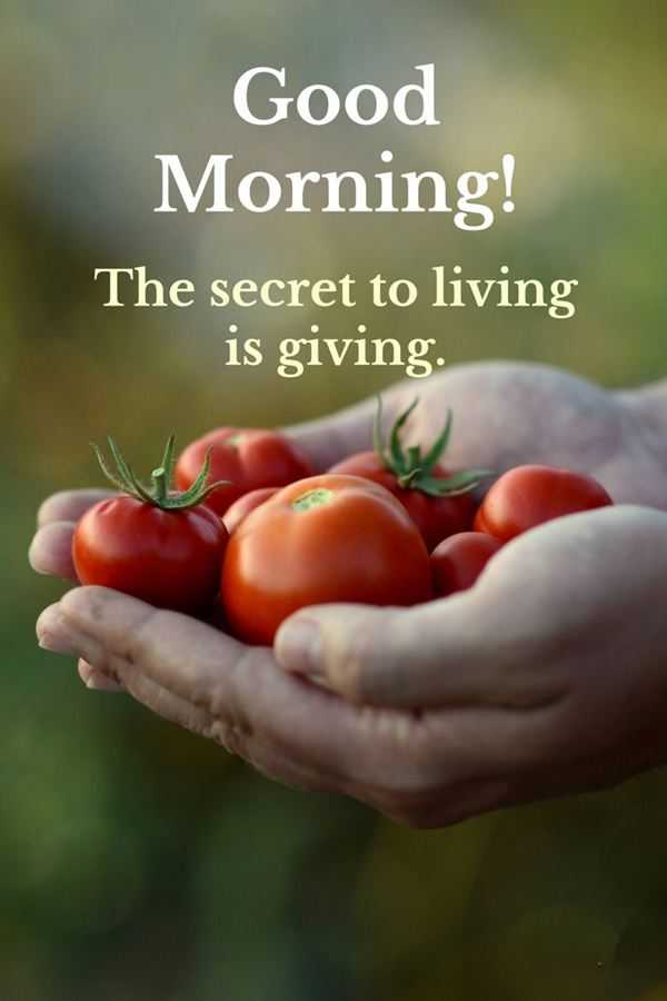 good morning quotes good morning living is giving the secret of life