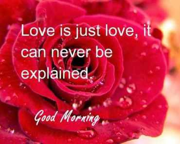 Good Morning Quotes Love sayings Good Morning Love Is Just Love. Love it