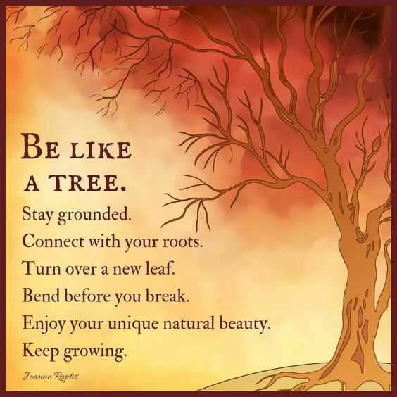 Positive Life Quotes: Life Sayings Be Like A Tree Stay ...