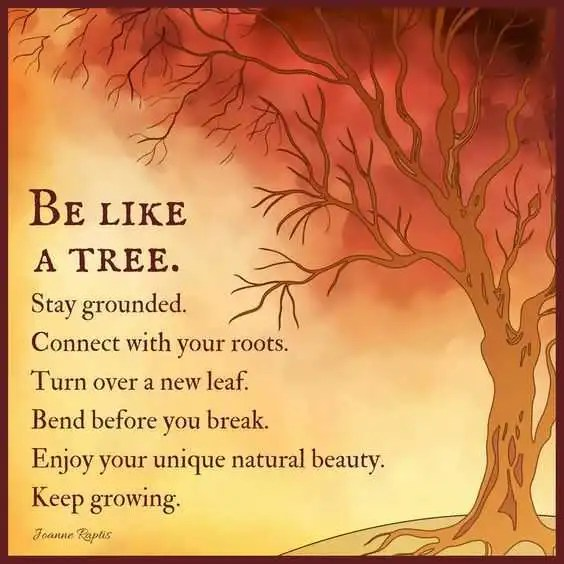 Natural Life Quotes Alluring Positive Life Quotes Life Sayings Be Like A Tree Stay Grounded