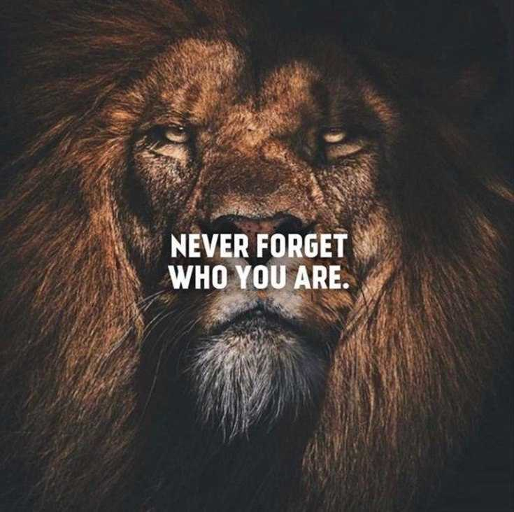 58 Motivational Quotes Quotes About Success 44
