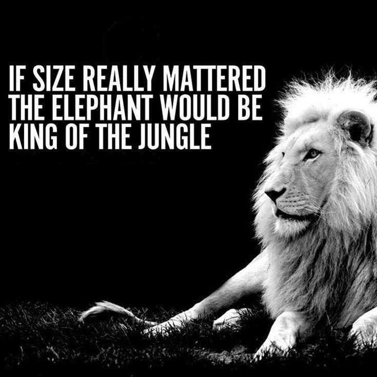 58 Motivational Quotes Quotes About Success 45