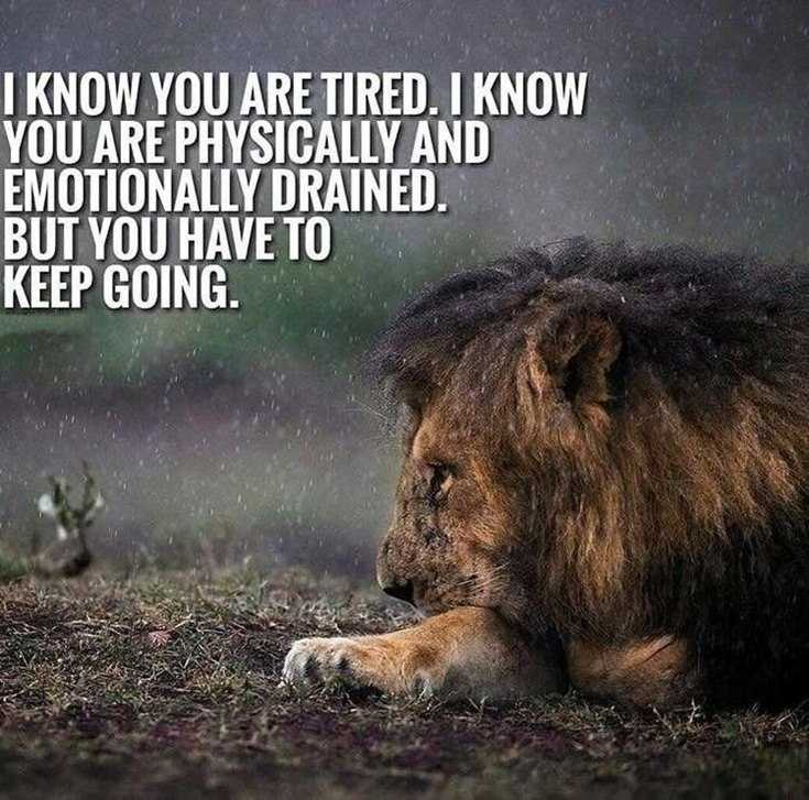 57 Never Give Up Quotes About Life And Happiness Precocious Spartan 53