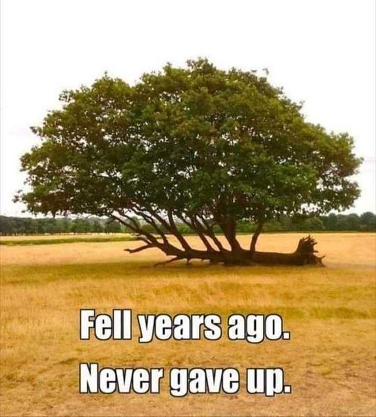 57 Never Give Up Quotes About Life And Happiness Precocious Spartan 7