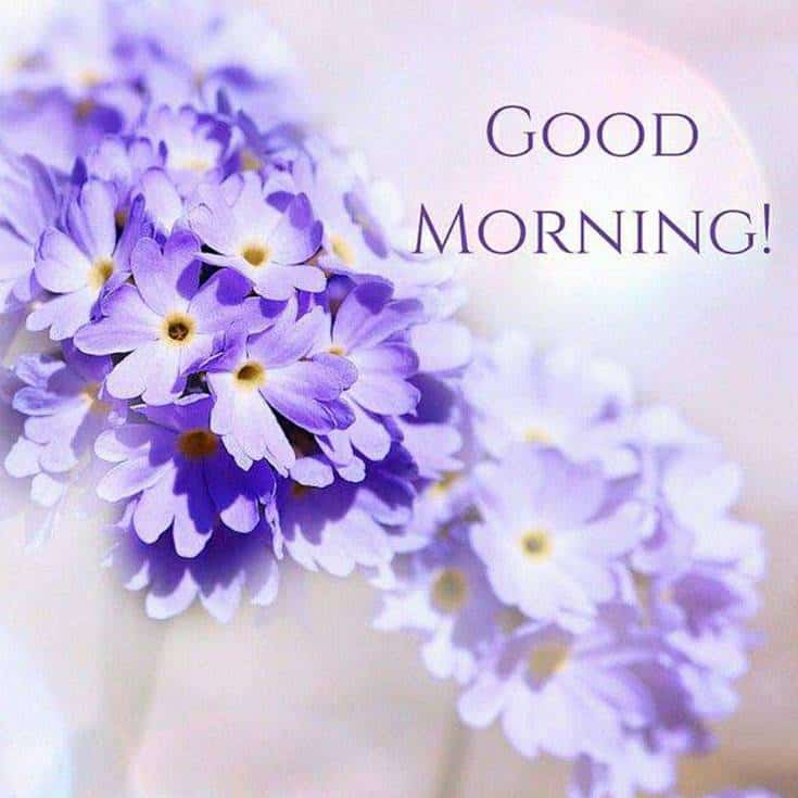 56 Best Good Morning Flowers images 1