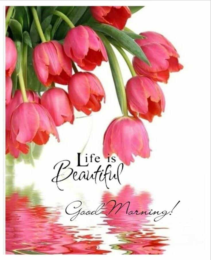 Best Good Morning quotes and wishes images