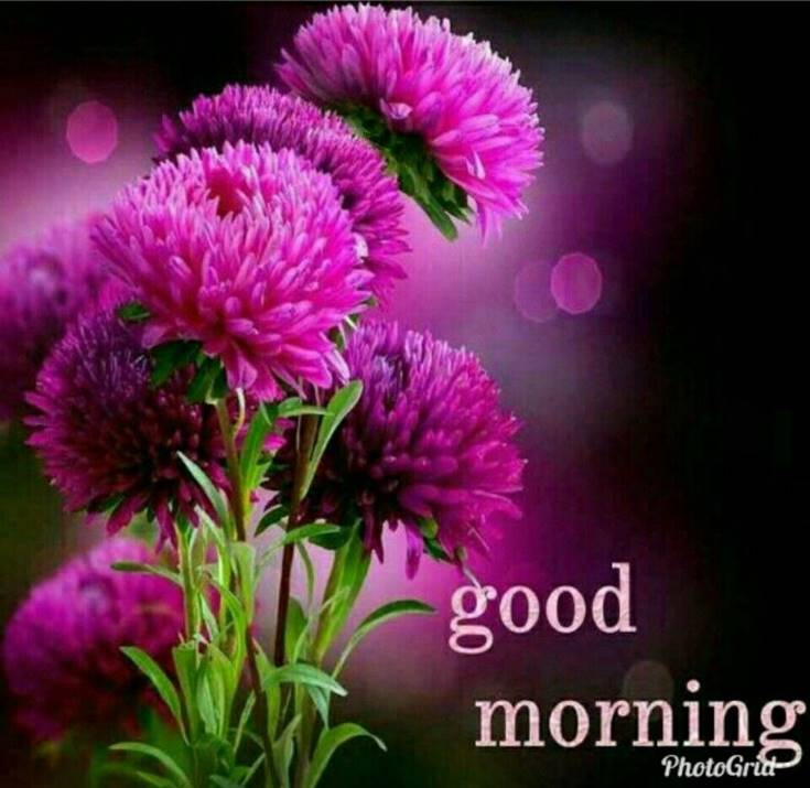 56 Best Good Morning Flowers images 3
